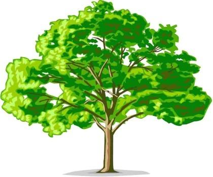 Дерево каталогов